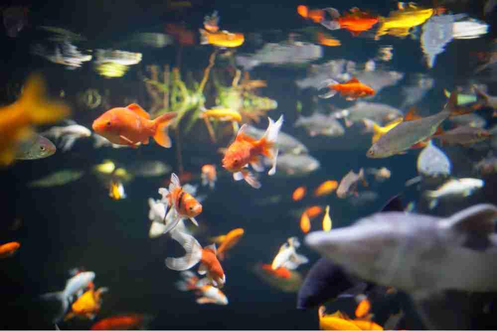 Aquarium de Paris in France