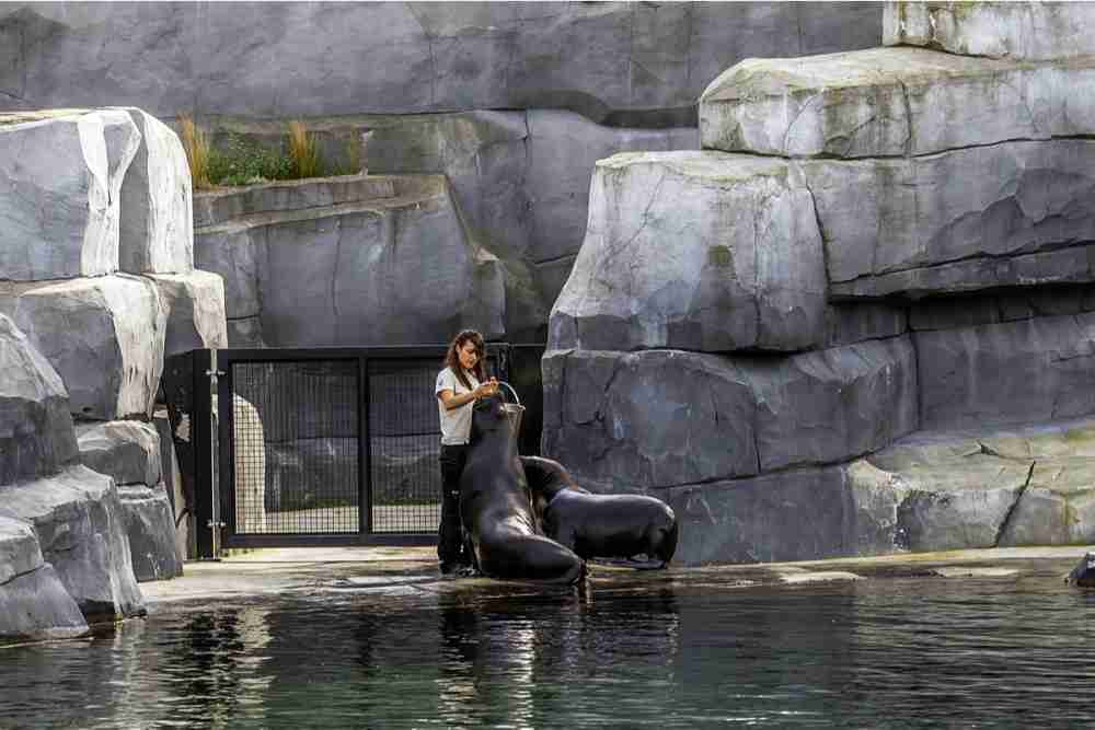 Zoological Park of Paris in France